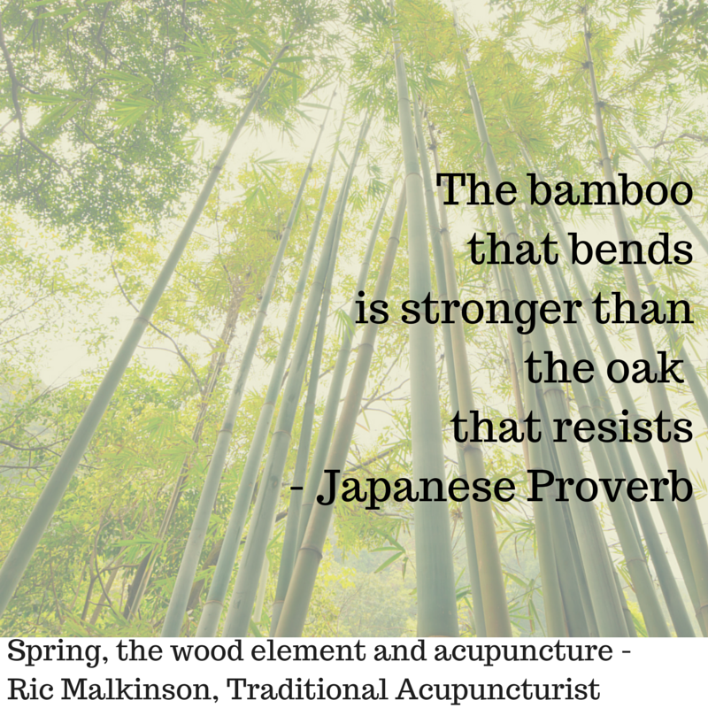 The bamboo that bends is stronger than-2